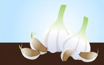 Hướng dẫn cách trồng tỏi thường cho tỏi cô đơn Lý Sơn đạt năng suất cao