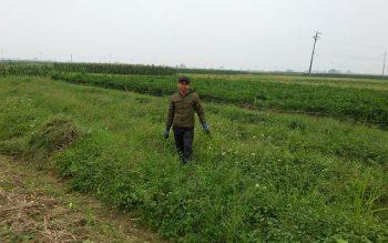 Cách trồng cây cà gai leo đạt năng suất đem lại kinh tế cao