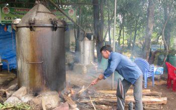Cách làm tinh dầu tràm Huế theo phương thức cổ truyền