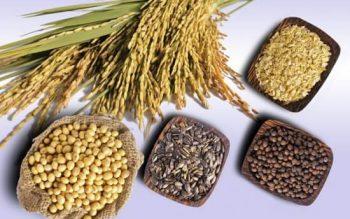 Tác dụng của bột ngũ cốc – Cung cấp dinh dưỡng, ngăn ngừa ung thư