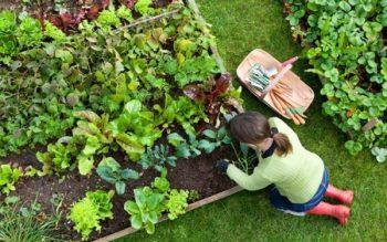 Cách chăm sóc các loại cây nhỏ trong vườn